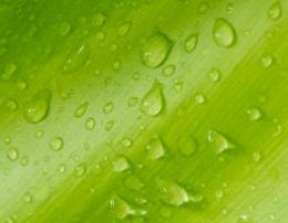 Bio-based TPU - 环保的坚持,大东的价值